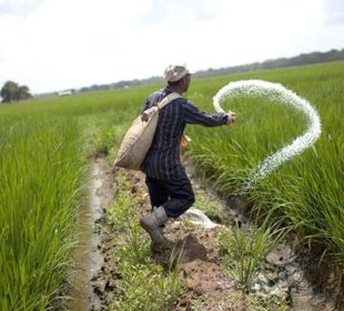 Fertilizers Subsidy
