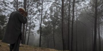 Pakistan Forests